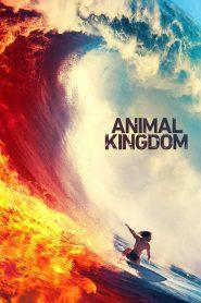 Animal Kingdom download | o2tvseries